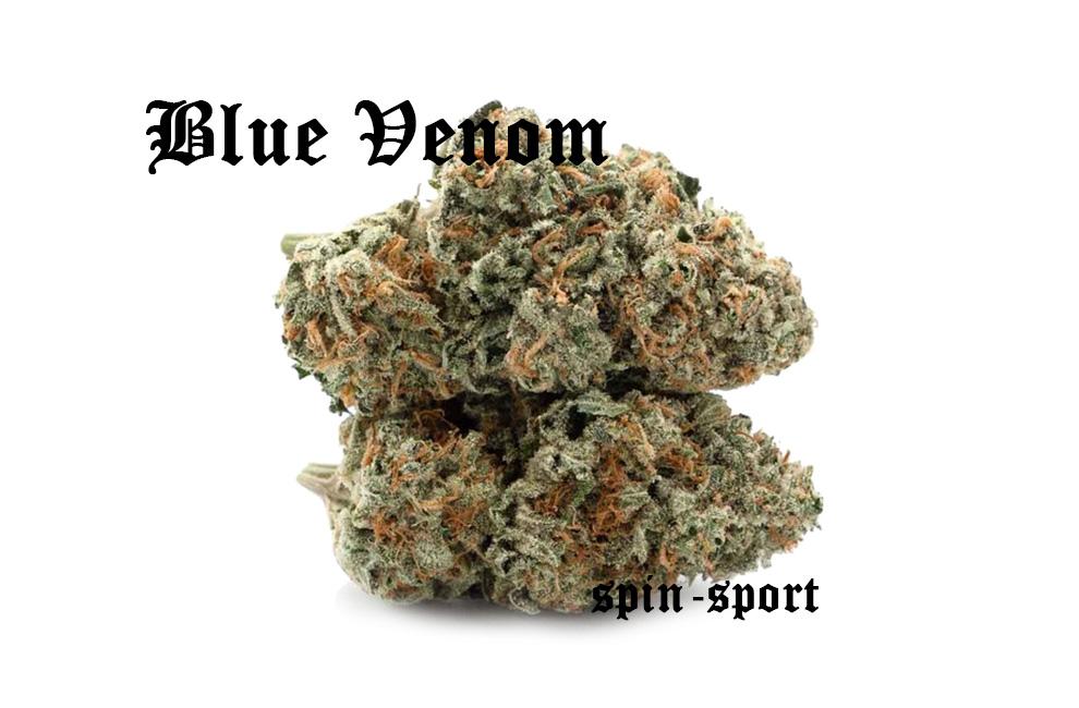 Blue Venom Marijuana Strain