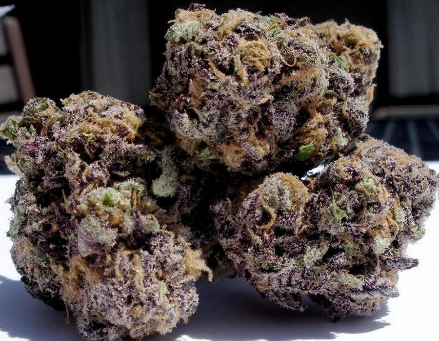 purple g bud