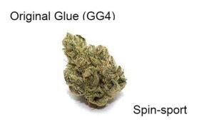 Original Glue (GG4): a Review