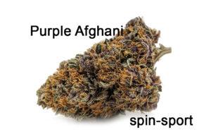 Purple Afghani Marijuana Strain