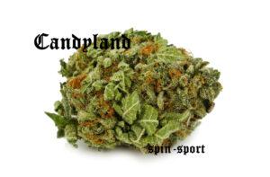 Candyland Marijuana Strain