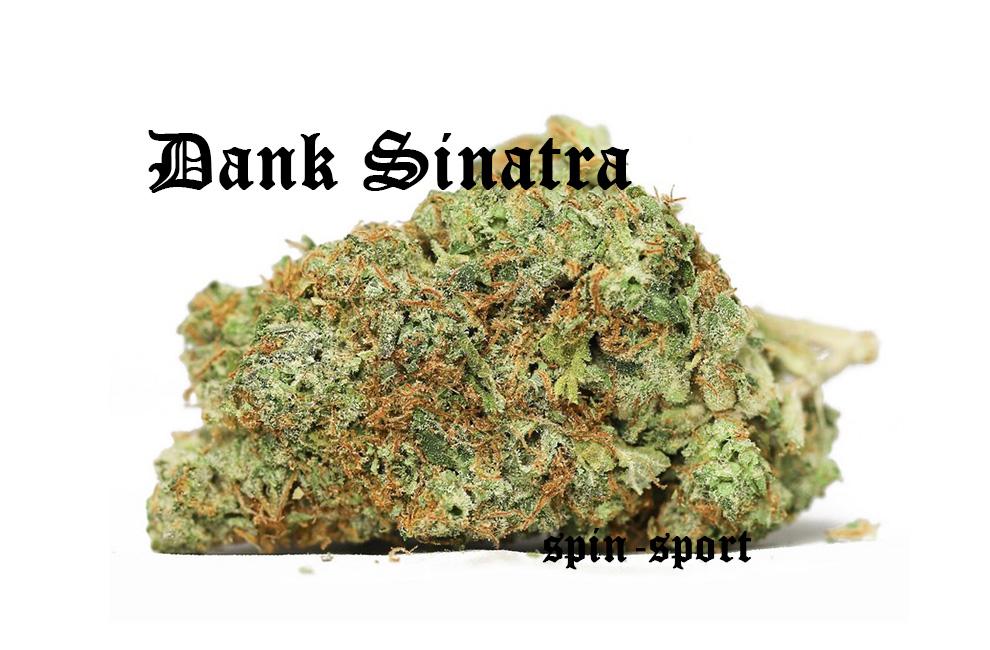 Dank Sinatra Marijuana Strain