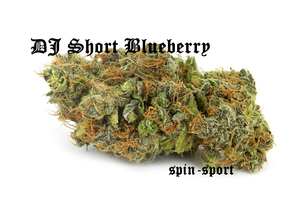 DJ Short Blueberry Marijuana Strain