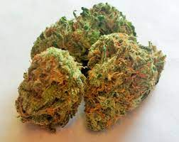 UK Cheese Cannabis Strain Information / CannaSOS