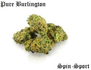 Pure Burlington