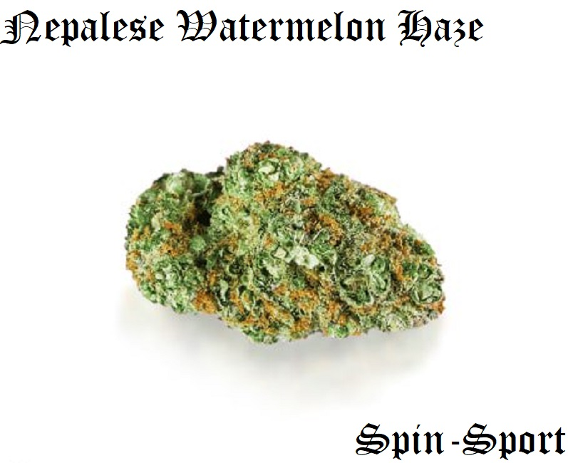 Nepalese Watermelon Haze
