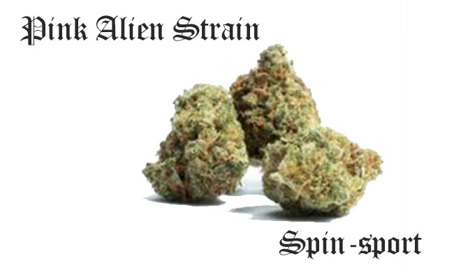 Pink Alien Strain