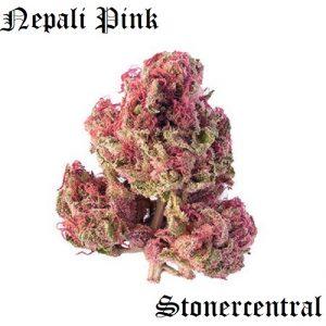 Nepali Pink