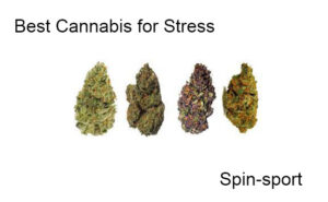 Best Cannabis for Stress