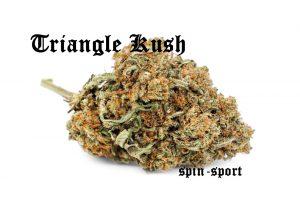 Triangle Kush Strain