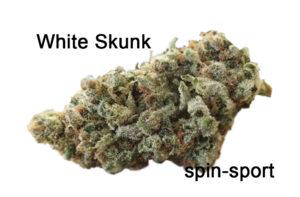 White Skunk Marijuana Strain