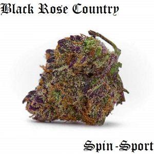 Sugar Black Rose strain review